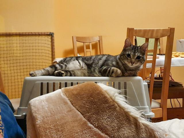 Baloo adoptado en Vitoria 018-2019-07-03