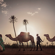 camel wedding photoshoot