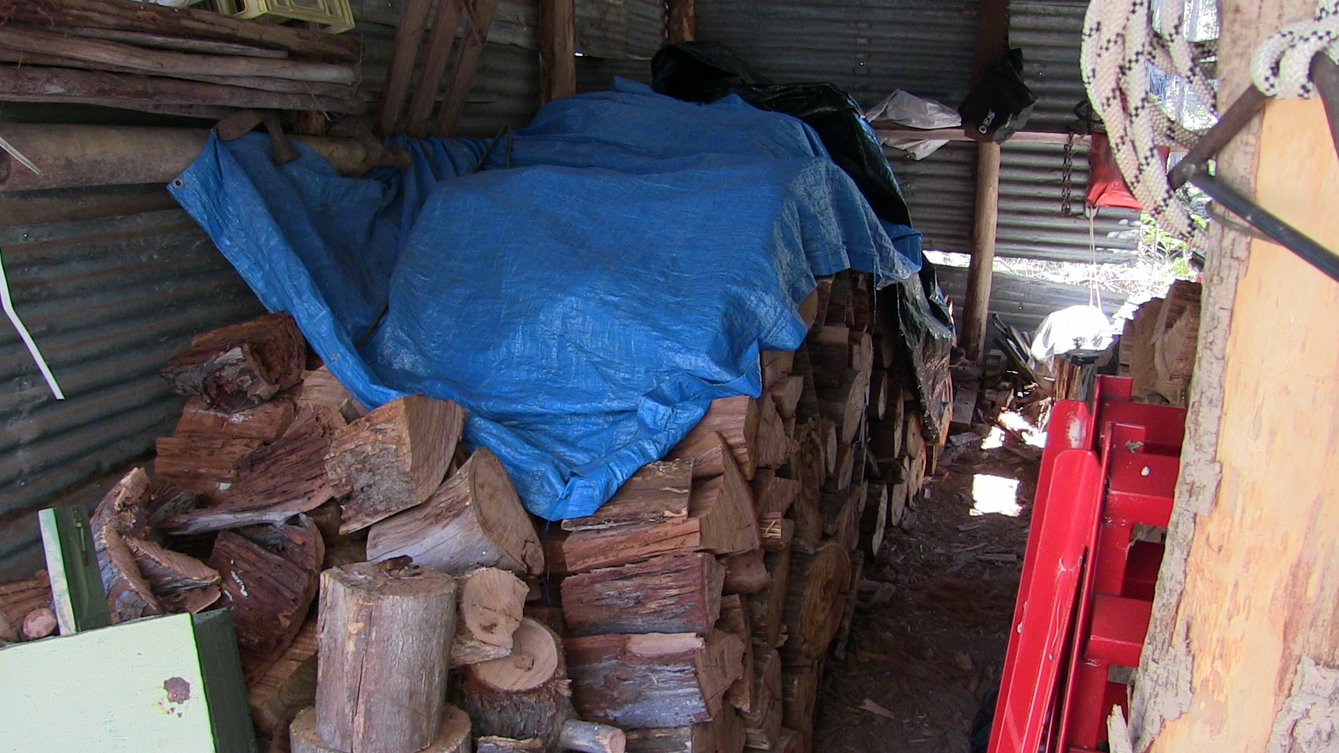 Collecting-Firewood-009-REDUCED.jpg
