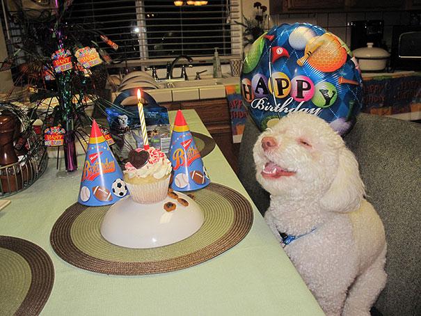30 фотографий самых счастливых животных на планете-19