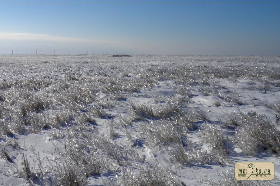 Ландшафти Чорноморського біосферного заповідника після екстремального намерзання у січні 2016 р.