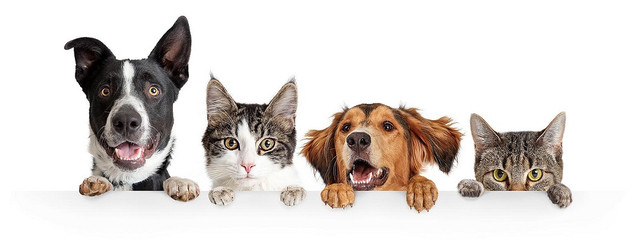 Cats-and-Dogs-Peeking-Over-White-Web-Banner-uxga