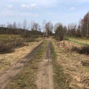 kwiecie-2021-Sadzenie-drzew-i-krzew-w-nektarodajnych-7