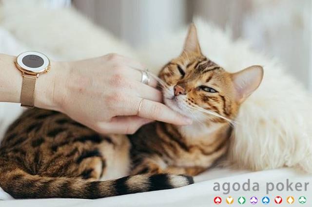 Benarkah Bulu Kucing Bahaya Bagi Anak dan Ibu Hamil?