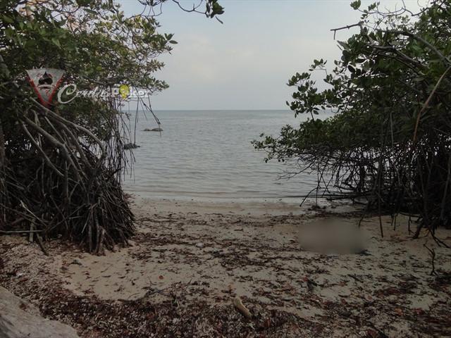 Sisi Lain Baluran dari Pantai Bama sampai 'Bird Watching'