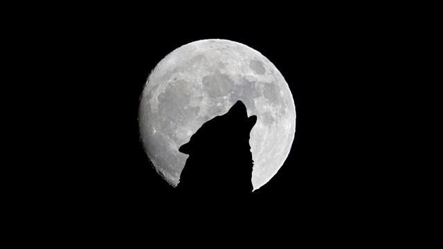 full-moon-wolf-howl-121949-2048x1152
