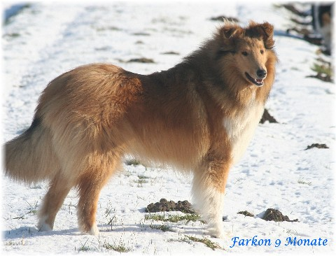 Farkon13-seitl-Schnee-2355.jpg