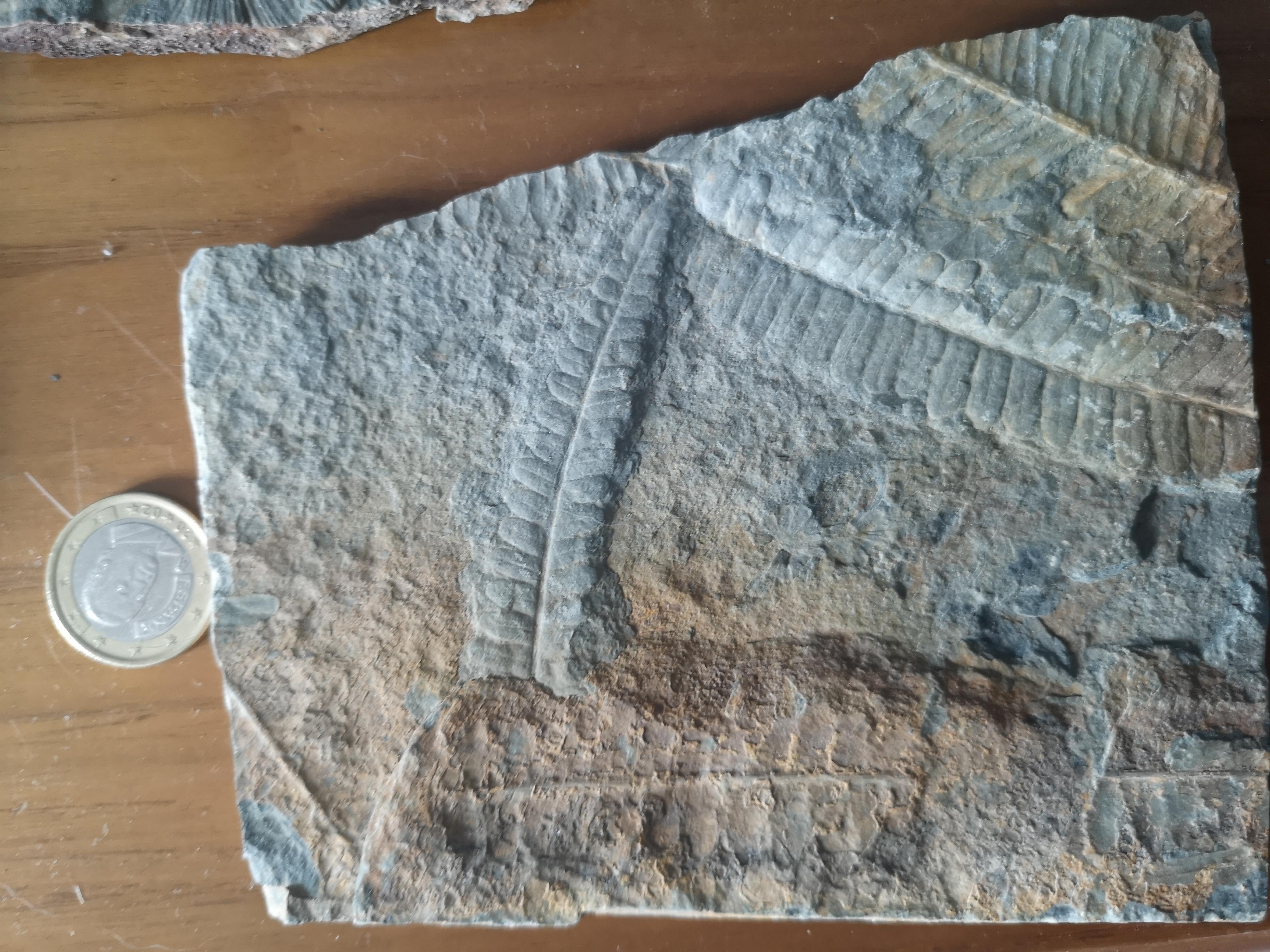 Fósil helecho IMG-20190810-181914