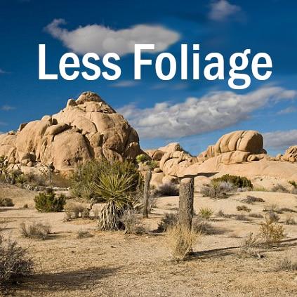Less Foliage / Меньше листвы