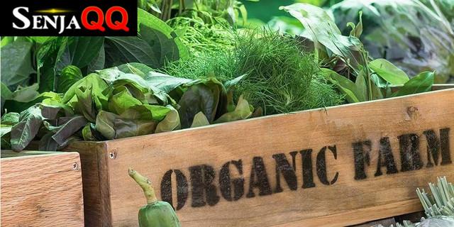 Apakah Sayur Organik Lebih Sehat dari Sayur Tanam Biasa?