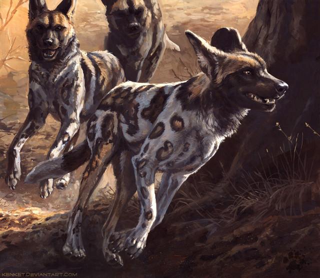 African-Wild-Dog-1.jpg