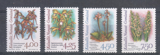Greenland Flowers