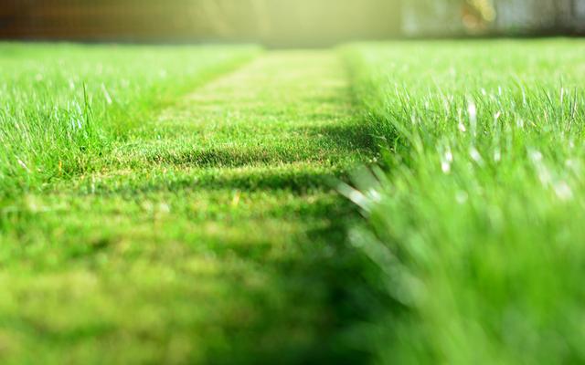 lawn-care