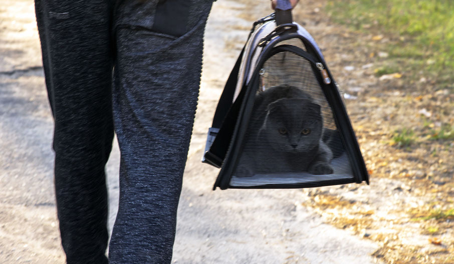 Backpack for cats