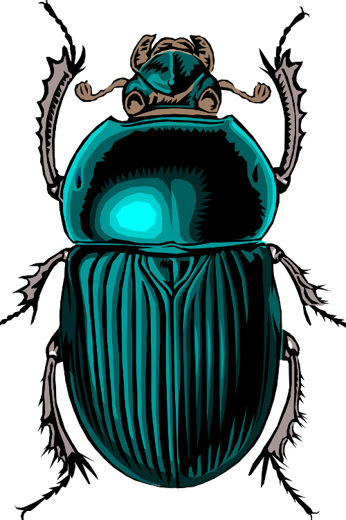 An image of a scarab, one of the most common of beetles.