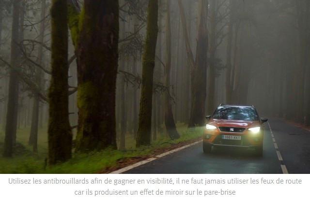 Feuilles mortes, pluie et brouillard : les défis de l'automne Fallen-leaves-rain-and-fog-the-challenges-of-autumn-04-HQ