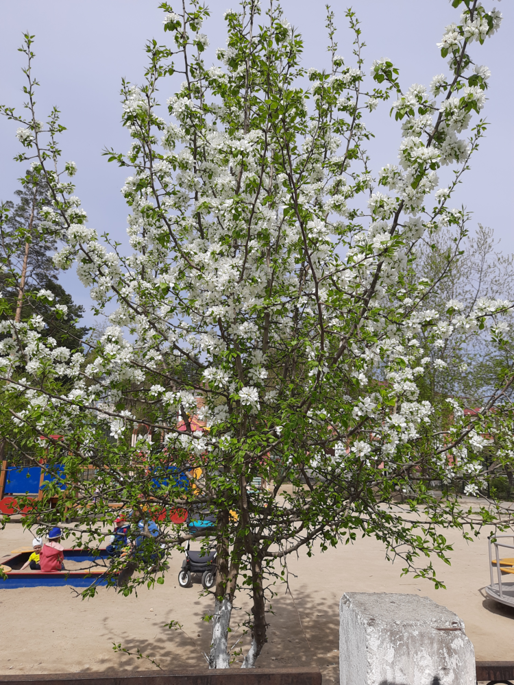 Bloom-2.png
