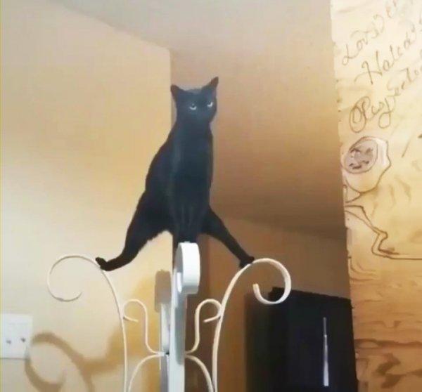 Кот на вешалке