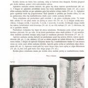 88-lpp