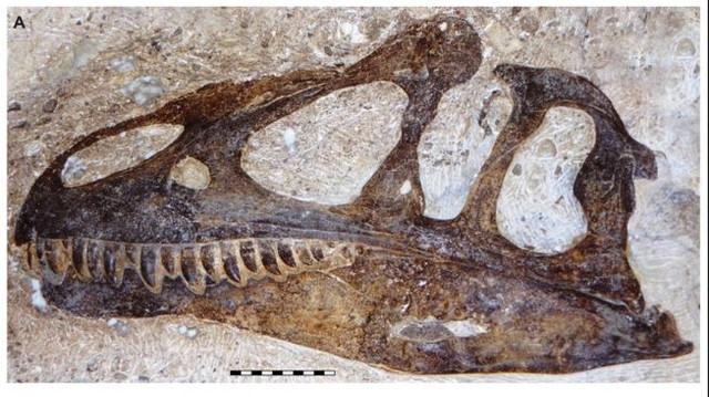 99141-spesies-dinosaurus-baru-allosaurus-jimmadseni