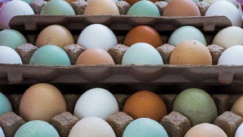 eggs-colors