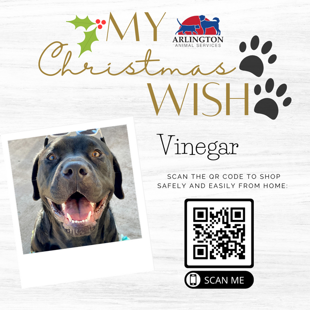 Animal-Services-2020-Angel-Tree-063.png