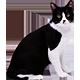 https://i.ibb.co/b3HX4RN/cat-whiteblack.png
