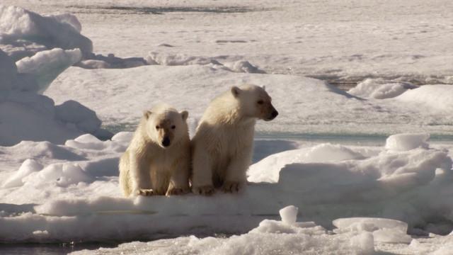 Frozen-Planet-S01-B03-1080p-Dual-HD-TR-Blu-Ray-x264-Uzayli-mkv-snapshot-03-40