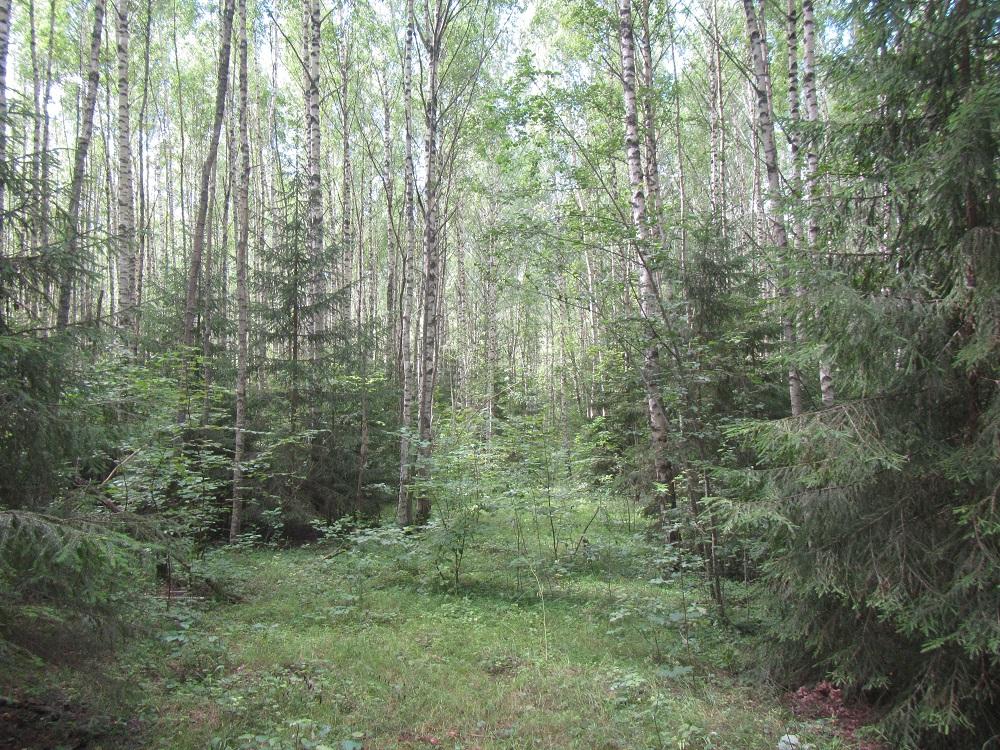 земли занятые лесами