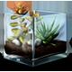 https://i.ibb.co/b3zrM7N/Succulent-Terrarium-icon.png