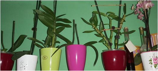 orhideje2