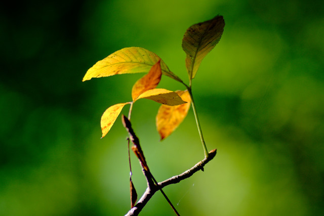 Early-Fall-Color