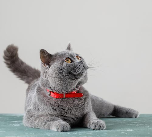 Precios 10 en Artículos para Gatos