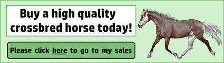 Sales_banner3e.jpg