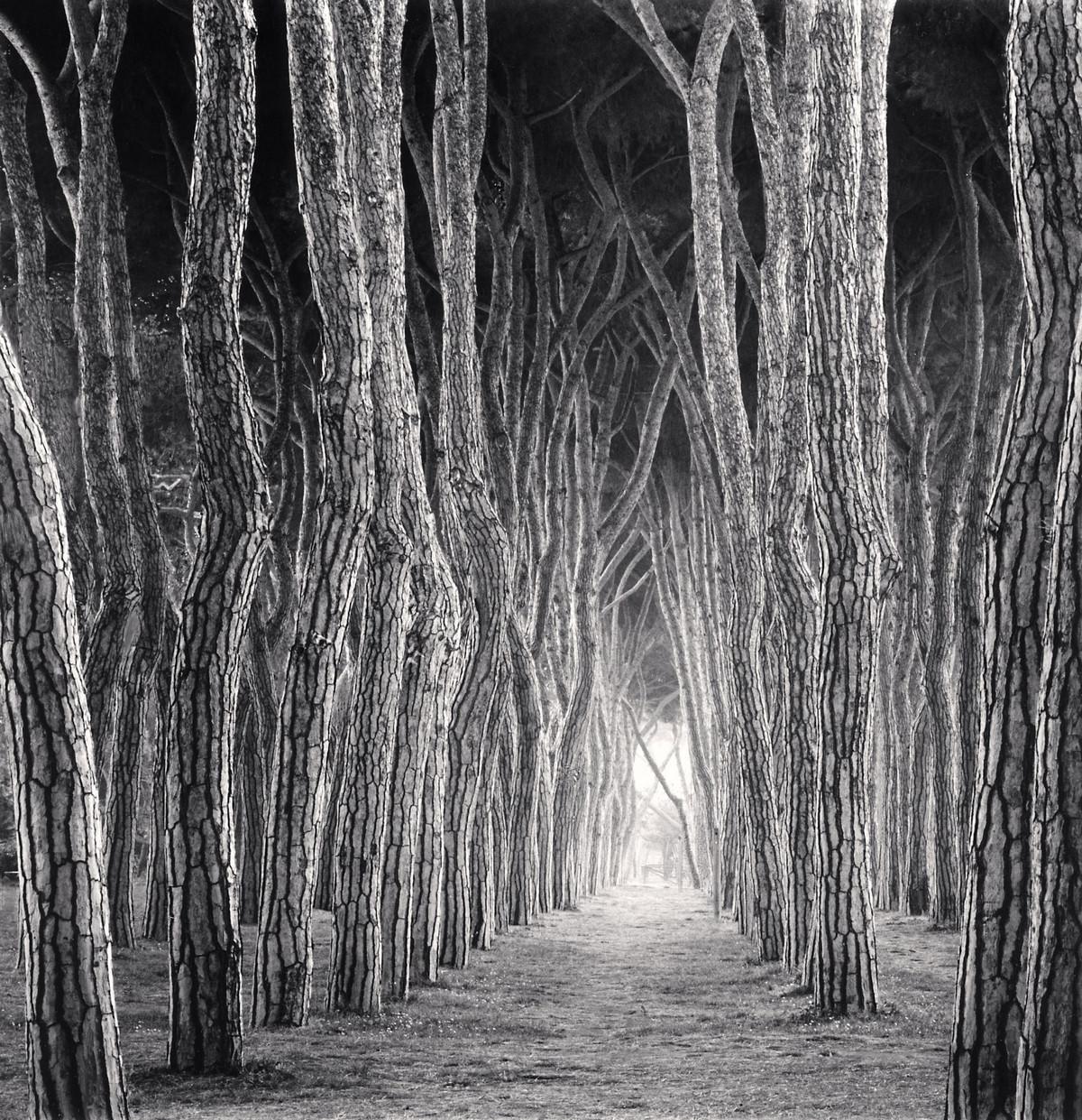 Портреты деревьев Майкла Кенны 12