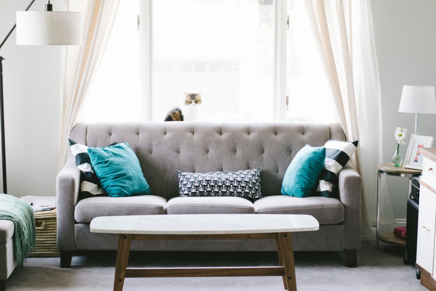 How to Choose the Best Couch For Your Living Room