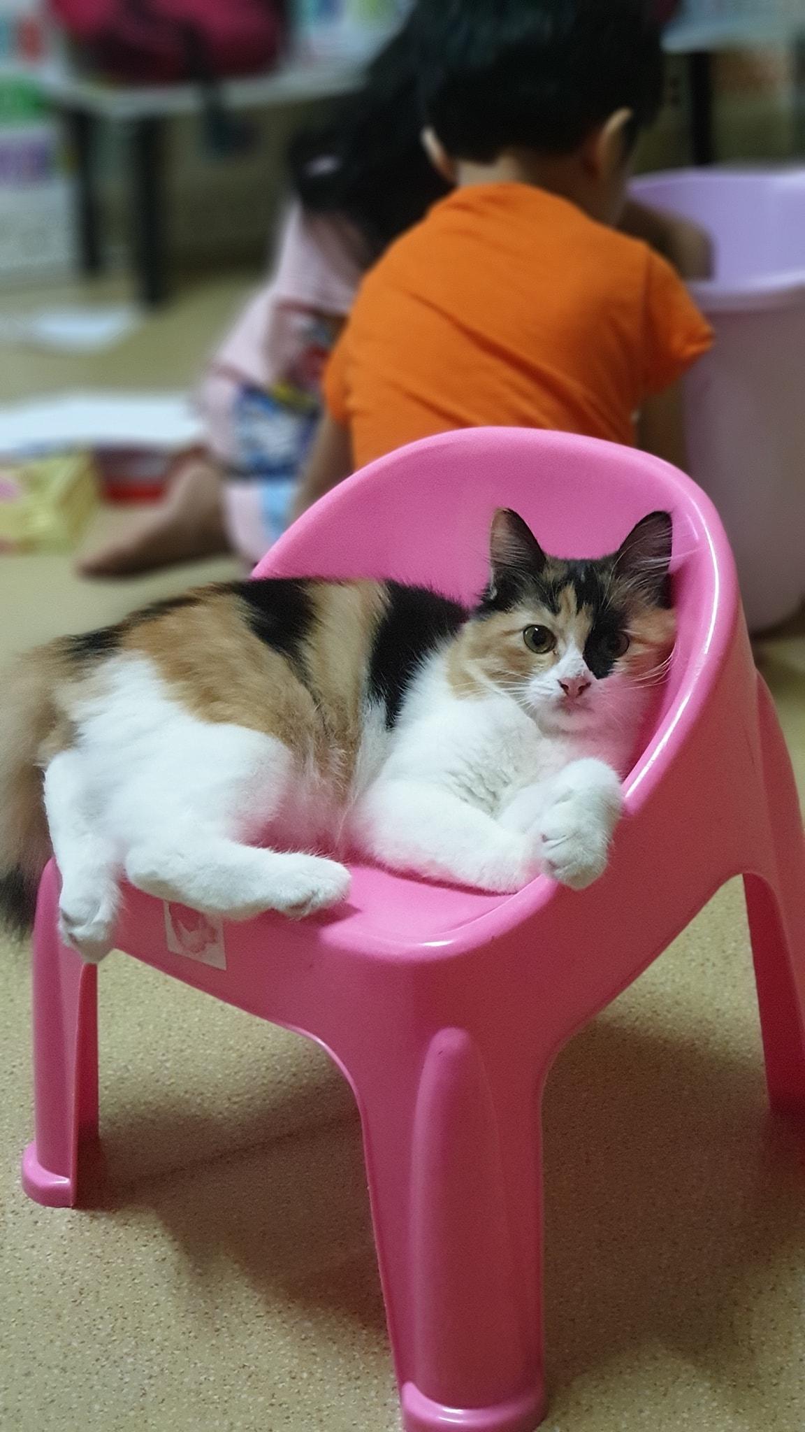kucingbatman.jpg