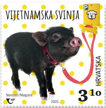 2020. year DJE-JI-SVIJET-PATULJASTE-IVOTINJE-Vijetnamska-svinja