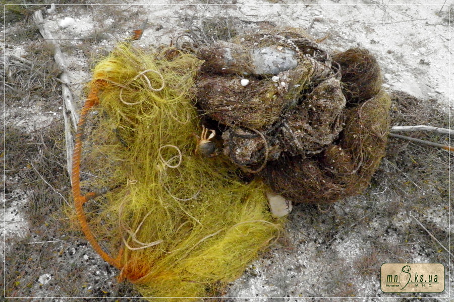 Охани, знайдені в кореневій частині острова Тендра (23.X.2019)