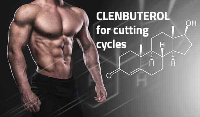 All Information about Clenbuterol Cycle