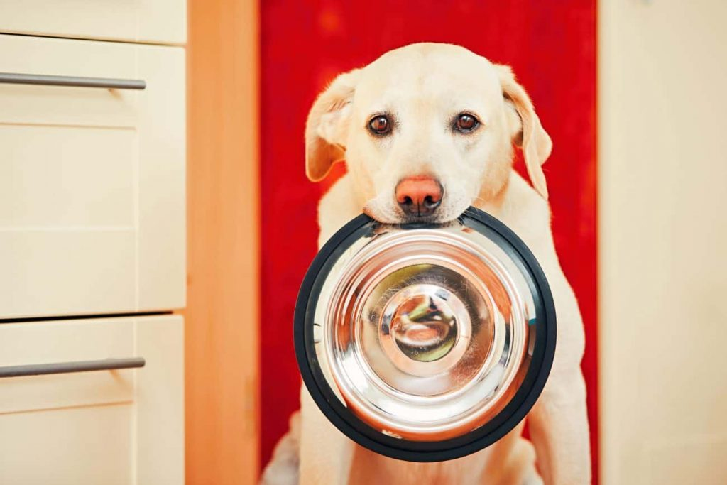 Hypoallergenic Dog Food: Which is the Best of 2021?