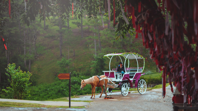 horse and carriage ride near me.jpg