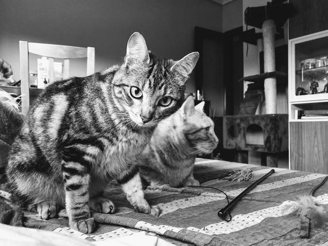 Baloo adoptado en Vitoria 014-2019-05-31