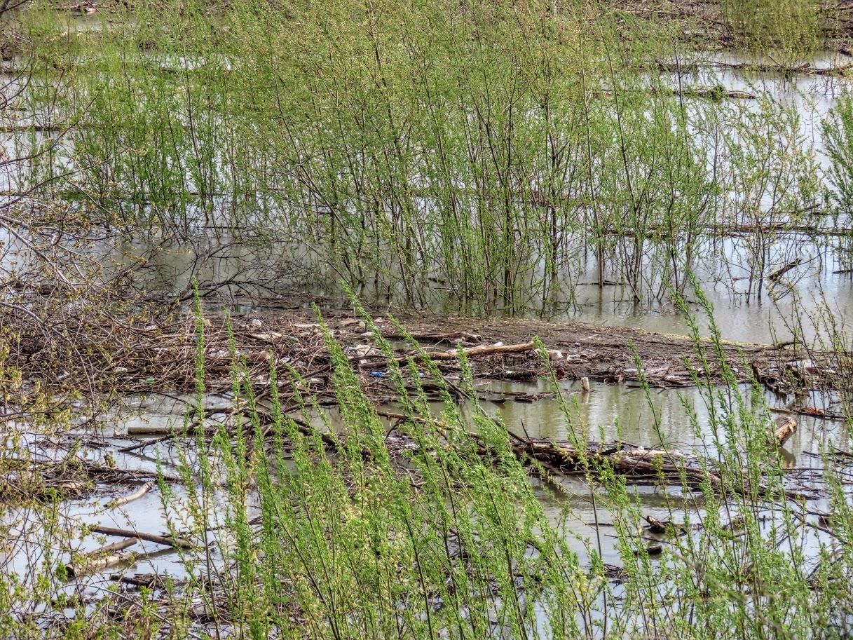 Уровень воды в Томи снова повысился IMG-7764