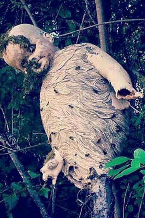 nest-of-wasp-101644-96039.jpg