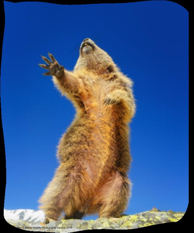 Divertiamoci con gli animali - Pagina 3 Screenshot-20191117-230651