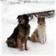 Leo10-Schnee-mit-Zulu