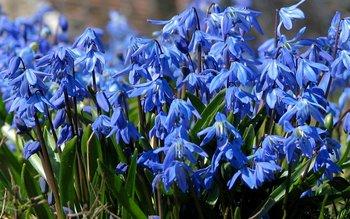 Kartinki24_ru_flowers_414