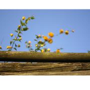 Abril es amarillo_03