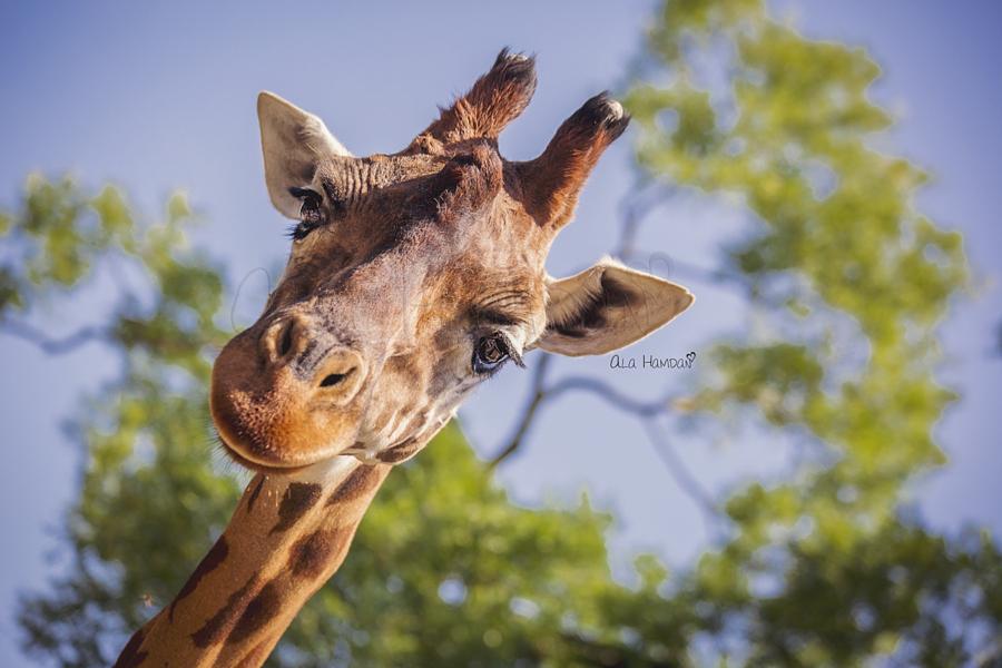 37 фотографий животных, которые вызывают улыбку - 10